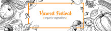 Harvest Festival Banner. Hand Drawn Vintage Vector Frame With Vegetables, Fruits, Leaves. Farm Market