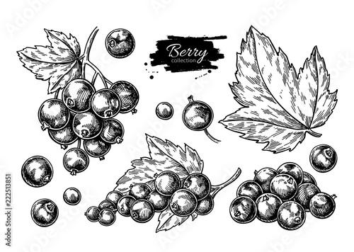 Rysunek wektor czarnej porzeczki. Szkic na białym tle gałąź jagód na wh