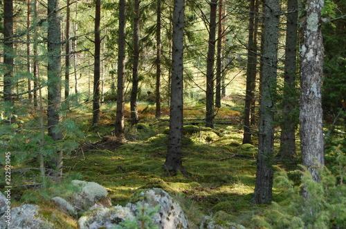 Fotografia, Obraz  Jag gick ut i skogen,förlorade mig själv men fann min själ.