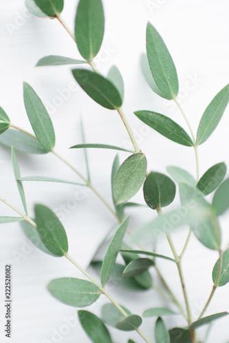 Obraz na płótnie Beautiful sprig of eucalyptus on a light wooden background