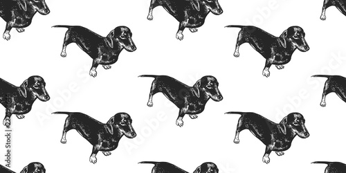 plakat Seamless pattern with cute puppies of Dachshund.