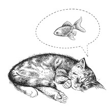 The Cute Kitten Sleeps And Dreams Of A Goldfish.