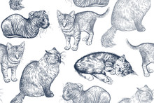 Cute Kittens. Seamless Pattern.