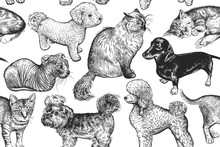 Cute Kittens And Puppies. Seamless Pattern.