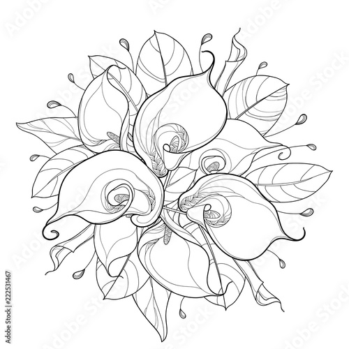 Photo Vector round bouquet of outline Calla lily flower or Zantedeschia, bud and ornate leaf in black isolated on white background
