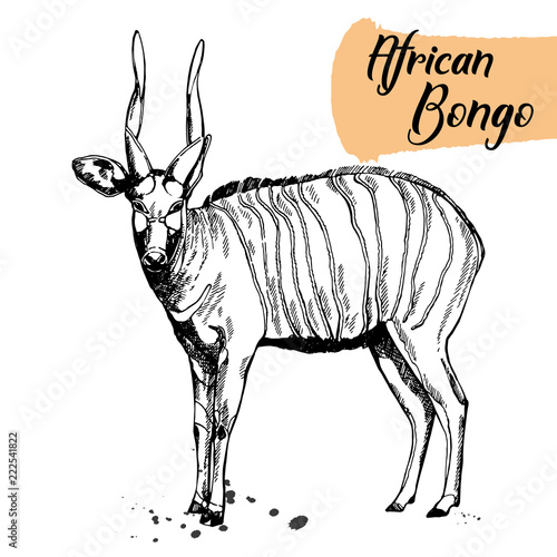Hand drawn sketch style bongo antelope isolated on white background. Vector illustration.