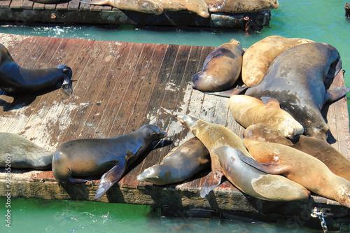 Photo  Sea lions pier 39
