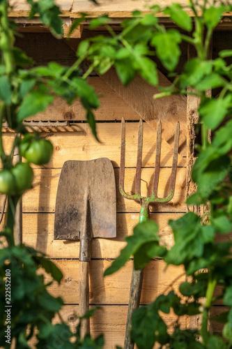 Staande foto Tuin jardin potager organique légumes automne saison cabane jardinier