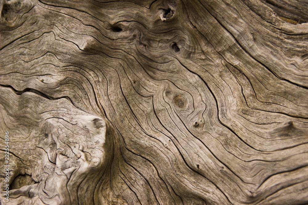 Fototapeta drift wood