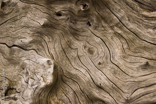 Photo drift wood