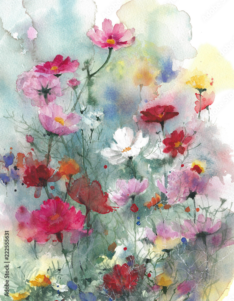 Fototapeta Wildflowers summer colorful flowers watercolor painting illustration isolated on white background