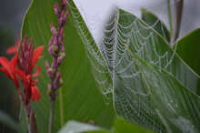 Spider Web On Flowers With Rain Droplets