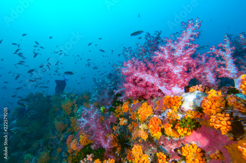 Tuinposter Koraalriffen The colorful coral in the coral reef