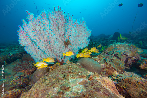 Papiers peints Recifs coralliens The colorful coral in the coral reef