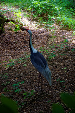 Beautiful Wild Bird In The Forest