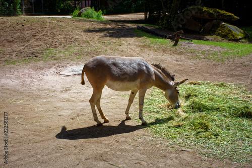 Photo  cute donkey's having lunch