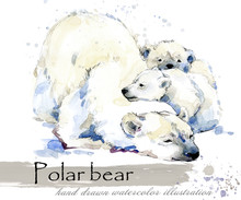 Polar Bear Hand Drawn Watercol...