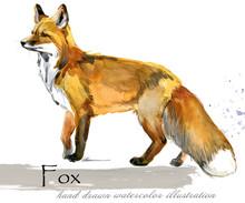 Fox Hand Drawn Watercolor Illustration