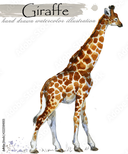 giraffe hand drawn watercolor illustration Wallpaper Mural