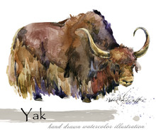 Yak Hand Drawn Watercolor Illustration