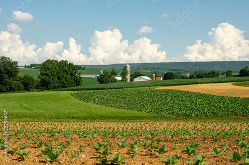 Lush Farmland of Lancaster County Tapéta, Fotótapéta