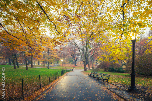 Foto op Plexiglas Amerikaanse Plekken Central park at foggy morning, New York City, USA