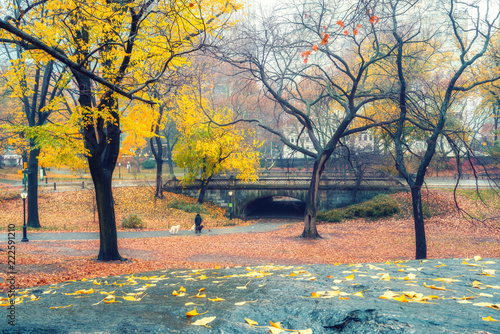 Foto op Plexiglas Amerikaanse Plekken Central park at rainy day, New York City, USA