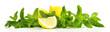 canvas print picture - Minze mit Zitrone - Panorama