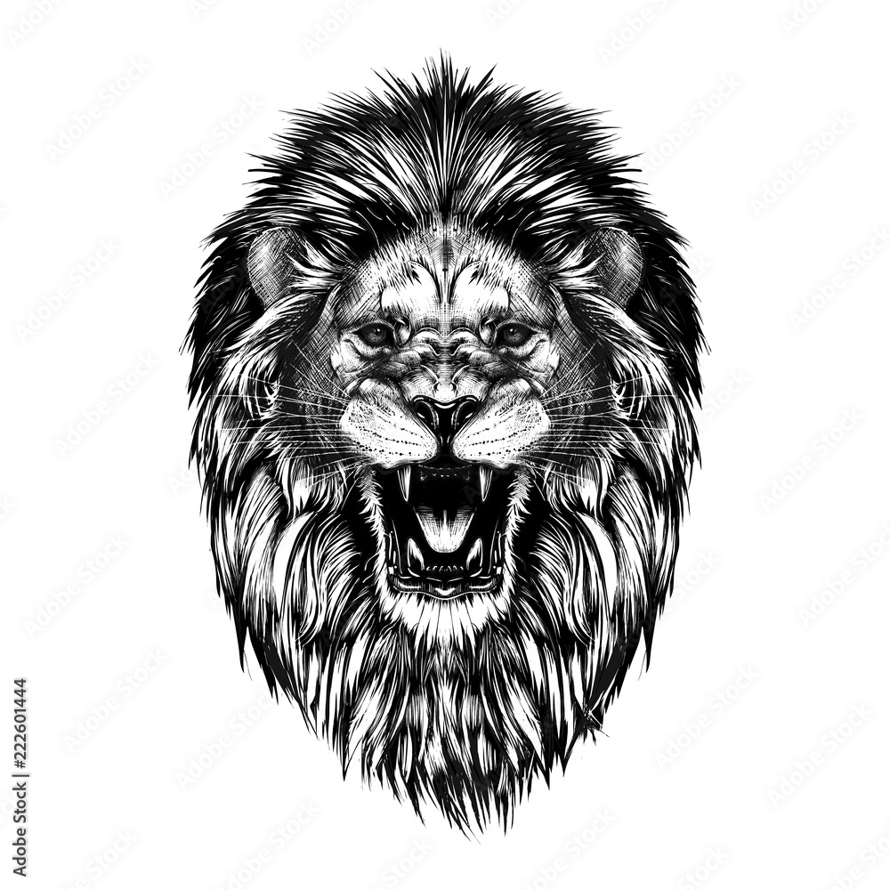 Fototapeta Hand drawn sketch of lion head in black isolated on white background.
