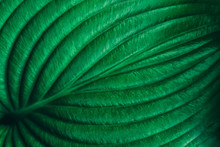 Plant Leaf Texture. Abstract Green Nature Background