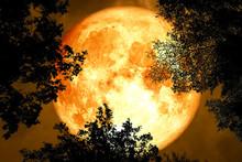 Full Blood Moon Back Silhouett...