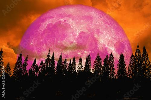 super pink moon back silhouette high pine in dark red orange night sky