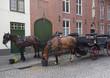 馬、ブルージュ、ベルギー