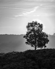 Fototapeta black and white misty morning