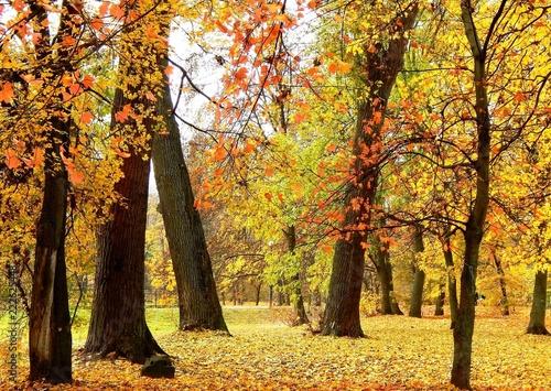 The Autumn Park © Ирина Пивненко