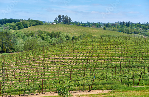 Foto op Plexiglas Verenigde Staten Vineyards in California, USA