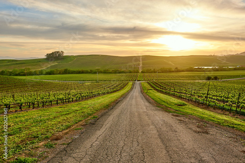 Staande foto Verenigde Staten Vineyards at sunset in California, USA