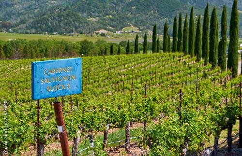 Foto op Canvas Verenigde Staten Cabernet Sauvignon wine grape variety sign in vineyard