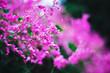 Leinwanddruck Bild - beautiful blossom tree with gradient