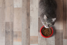 Adorable Cat Near Bowl Of Food Indoors. Pet Care