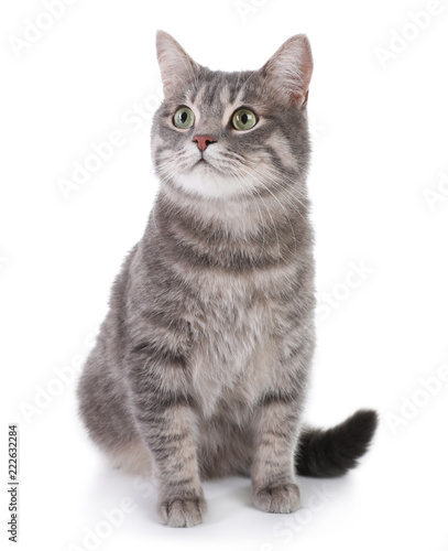 Papiers peints Chat Portrait of gray tabby cat on white background. Lovely pet