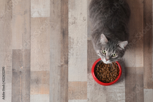 Fotobehang Kat Adorable cat near bowl of food indoors. Pet care