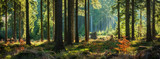 Fototapeta Las - Panoramic Sunny Forest in Autumn