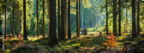 Spoed Fotobehang Bos Panoramic Sunny Forest in Autumn
