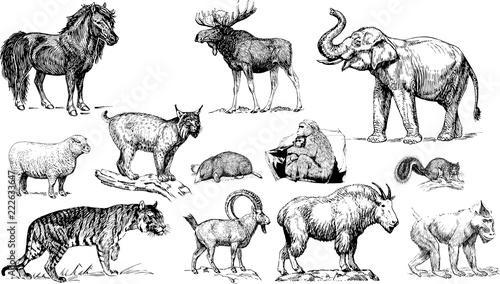 Fototapeta  動物園のイラスト