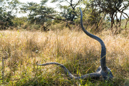 An Impala Skull In the African Plain
