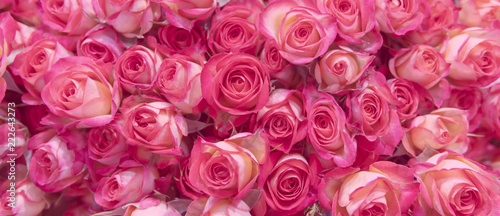 Background of pink roses