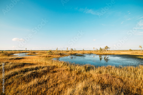 Swampy swampy water landscape. Arable panorama of the marsh land. A view of the swamp. Beautiful nature.