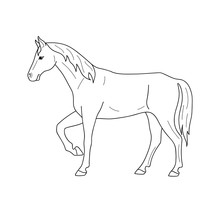 Isolated Black Outline Standing Horse On White Background. Side View. Curve Lines. Page Of Coloring Book.
