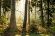Kaufunger Wald im Morgenlicht